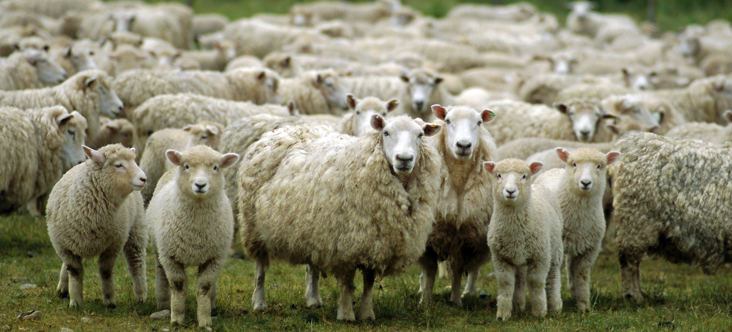 Moje ovce slušaju moj glas, i ja ih poznajem, i za mnom idu.
