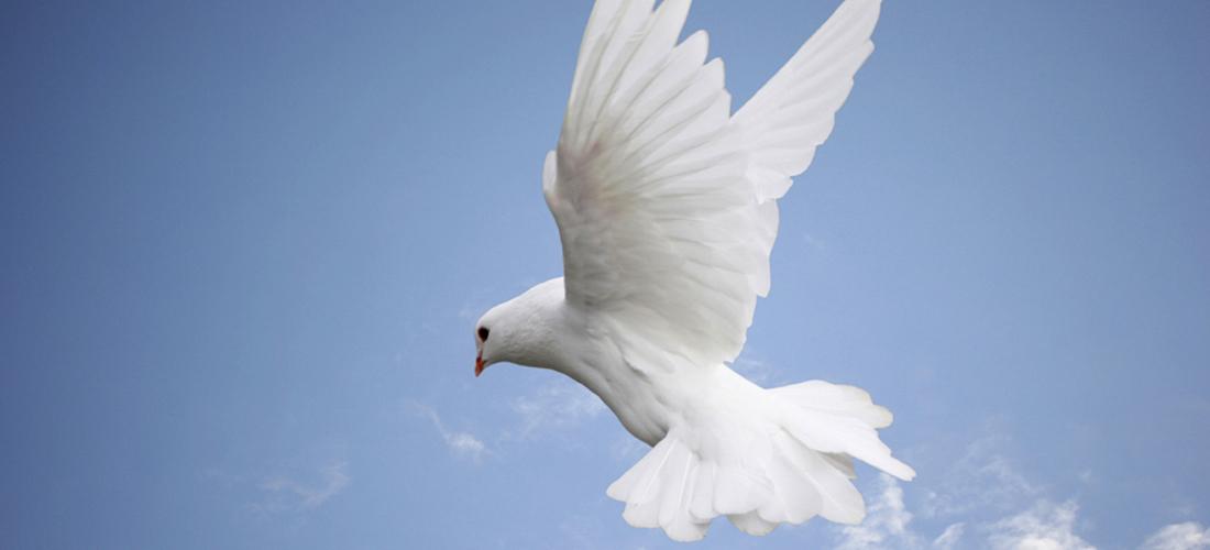 Mir vam ostavljam, mir vam svoj dajem.